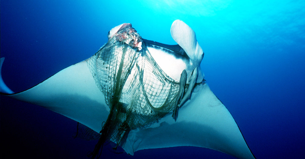 Project Aware, Kind Traveler Global Charity, Manta-in-net, Photo Credit - Project Aware.jpg