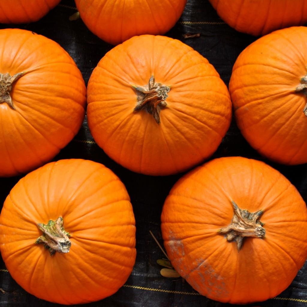 Pumpkin Patch_5