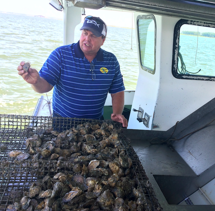 Waterman and oyster farmer, Johnny Shockley.