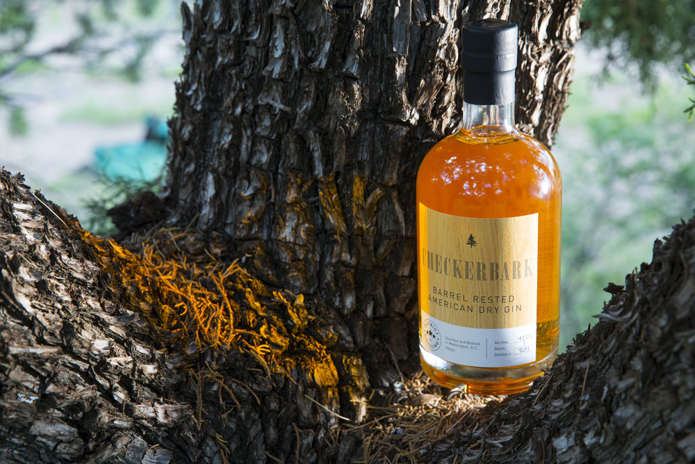 Checkerbark Barrel Rested American Dry Gin nestled in the nook of the tree that provided its botanical flavoring, the Checkerbark juniper.