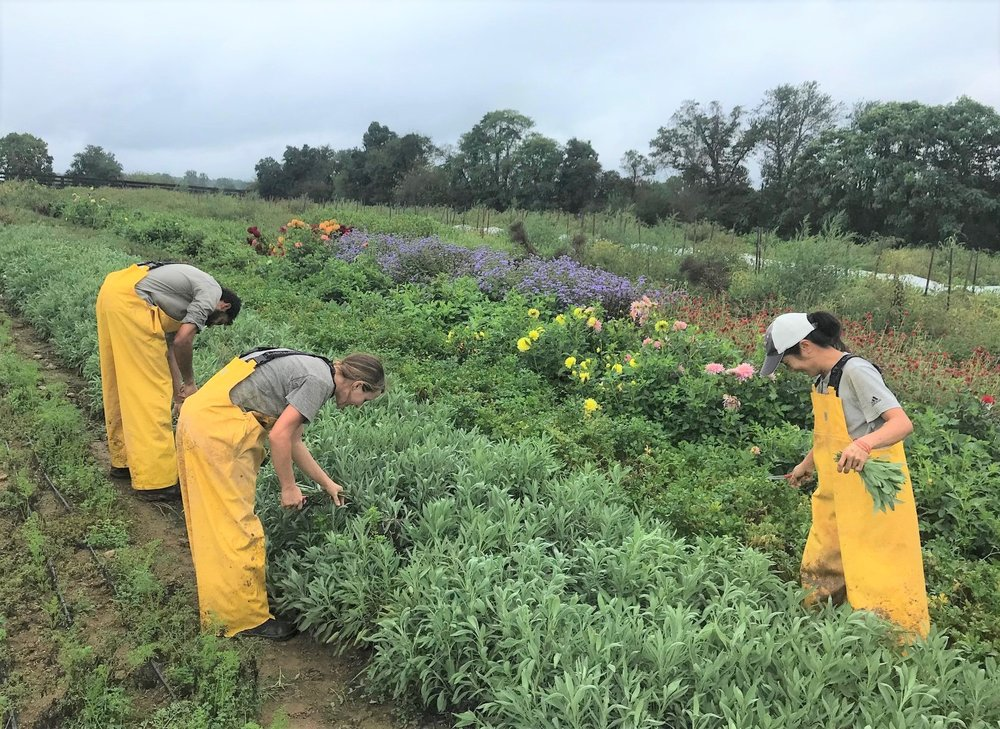 The Middleburg farm team harvests fresh produce that is targeted for District Wards 7 and 8.
