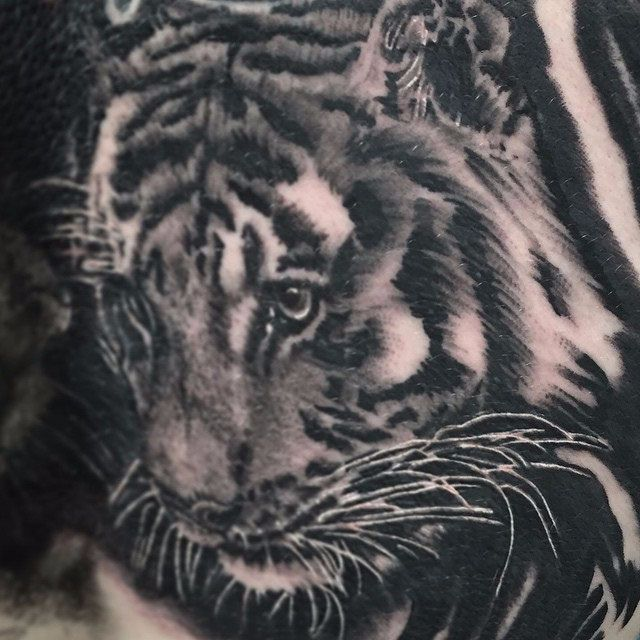 Inquisitive-Tiger-Tattoo.jpg