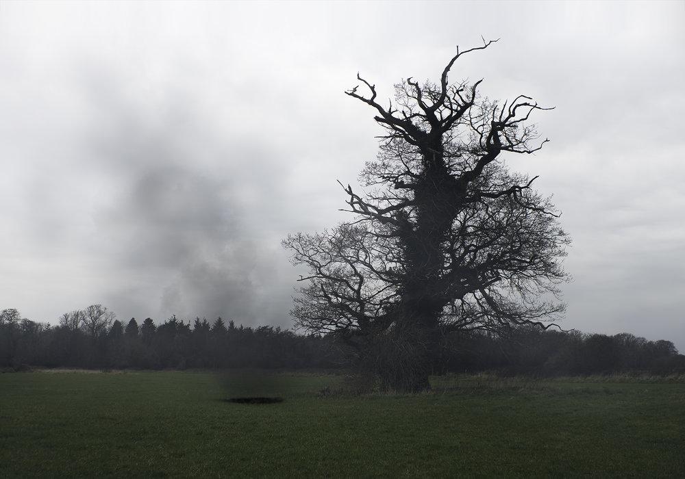 DrzewoNadia.jpg