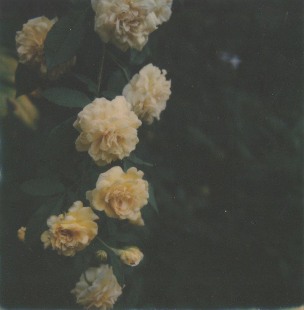 IMG_0711.JPG