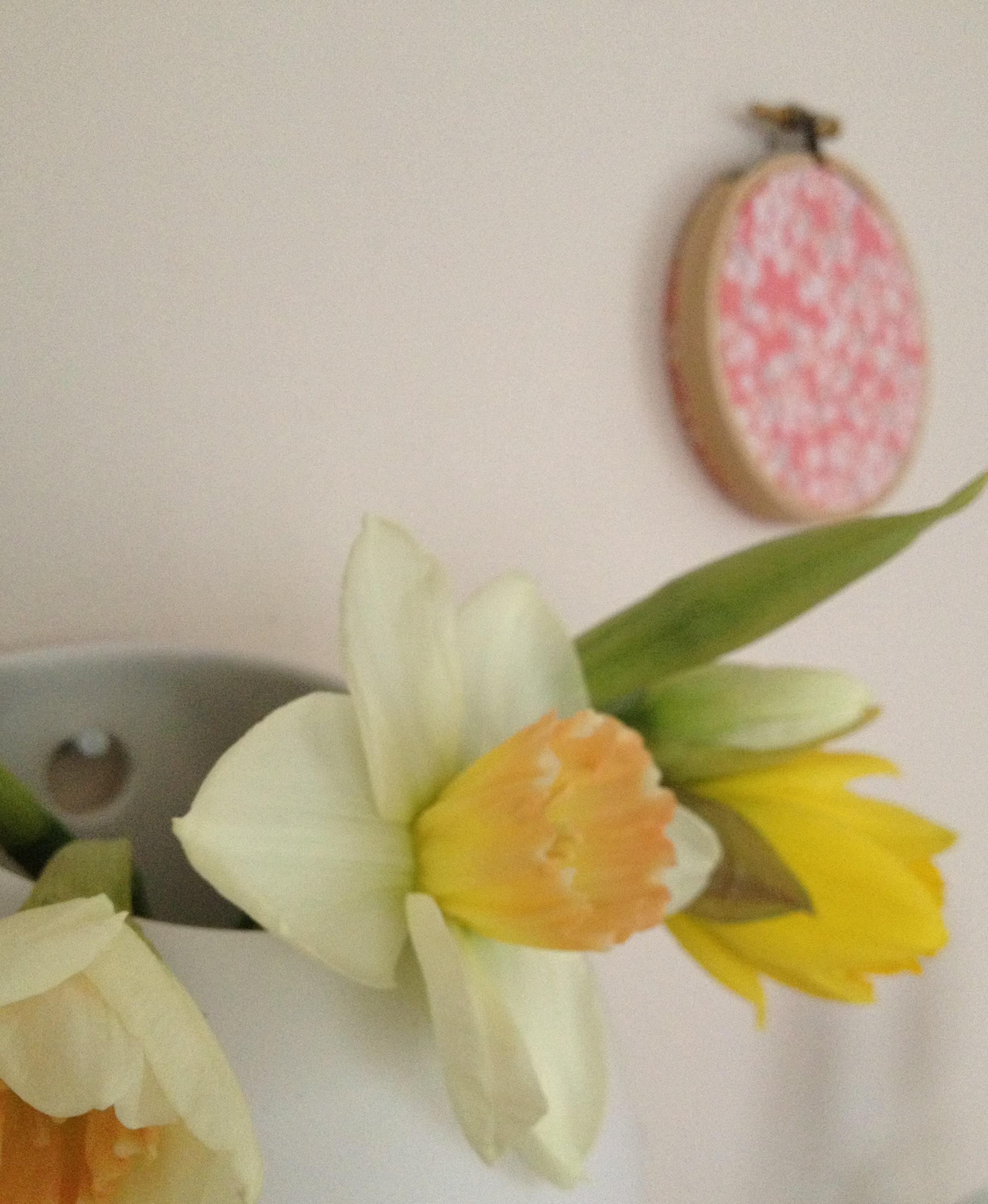 daffodils cropped