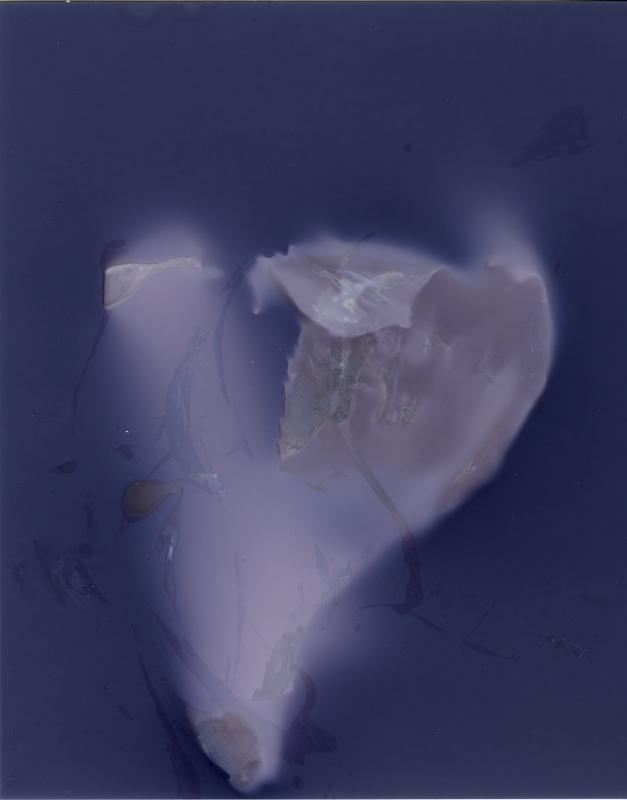 """Cauliflower No. 4, 2013. 5x4"""" silver gelatin paper negative"""