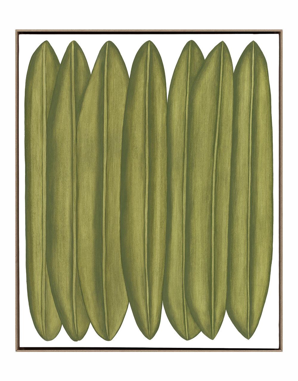 Musaceae Exedo