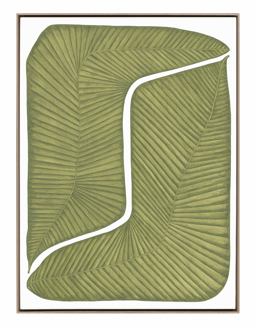 Musaceae Versus