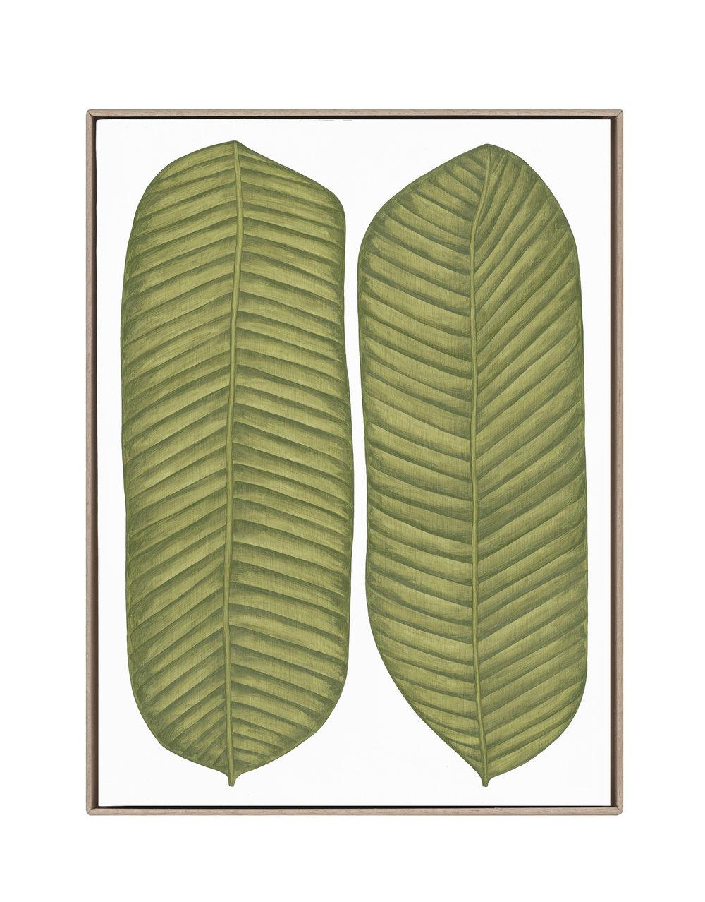 Musaceae Luncta