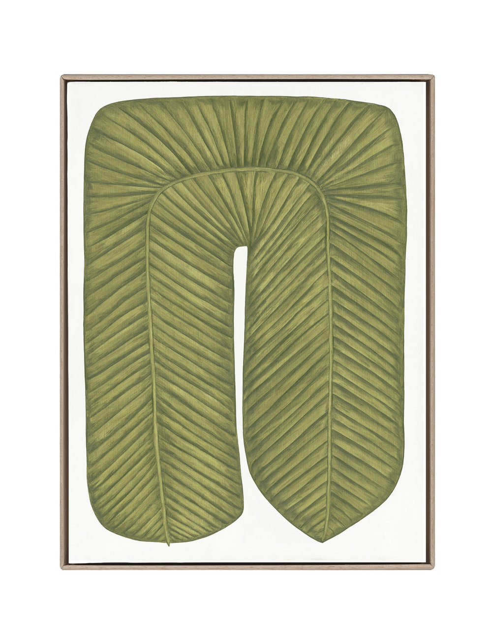Musaceae Supra Inferius