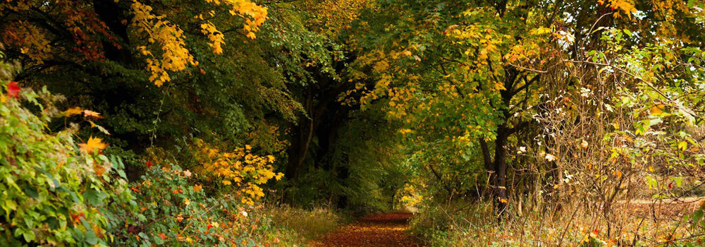 Explore ancient forests and beautiful countryside