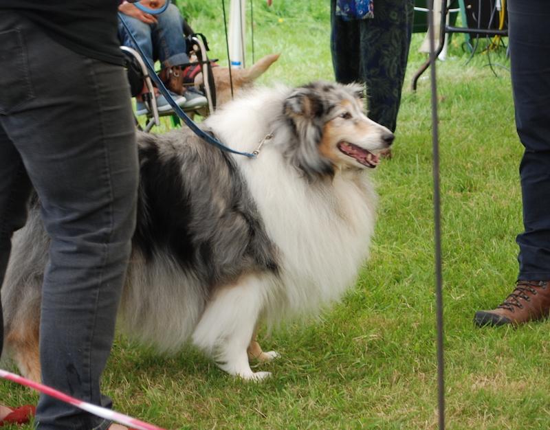 Dog Show -