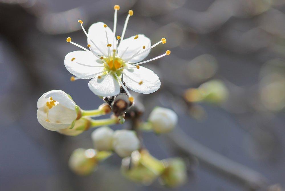 flower-1765626_1920.jpg