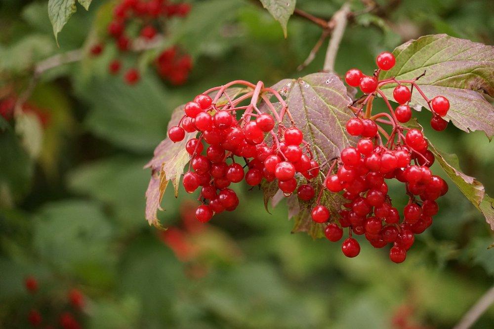 berries-955440_1920.jpg
