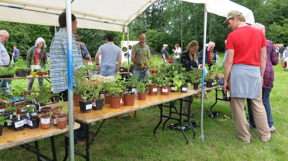 Plant Sale -