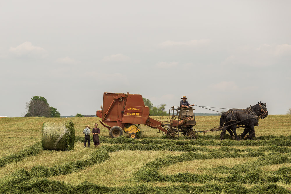 Harvest.jpeg