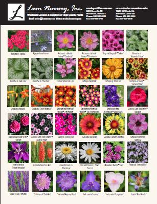 Perennials  7-21-17