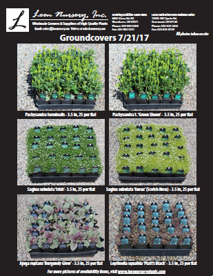 groundcovers mailchimp.png