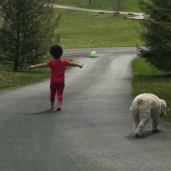 Maev is living her best life with Hannah's family dog.  Poor dude tried to keep up.