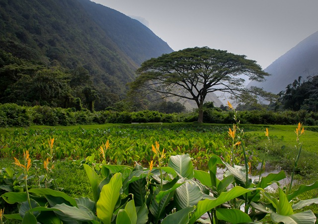 Waipio_Valley_4.jpg