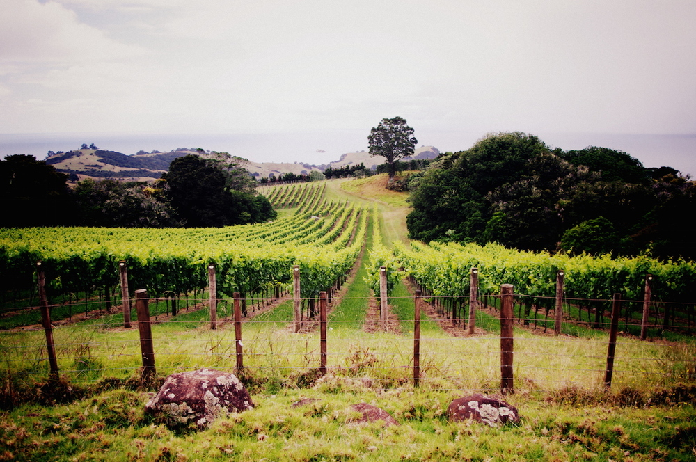 Man-OWar-Vineyard.jpg