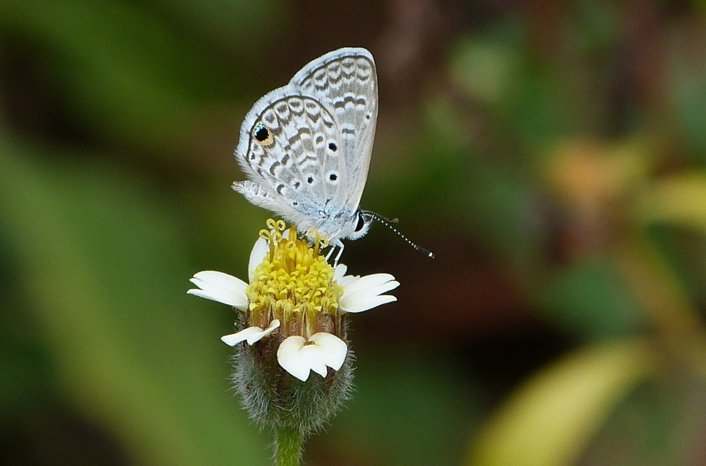 St-Lucia-Hannos-Blue-10-e1412807983823.jpg
