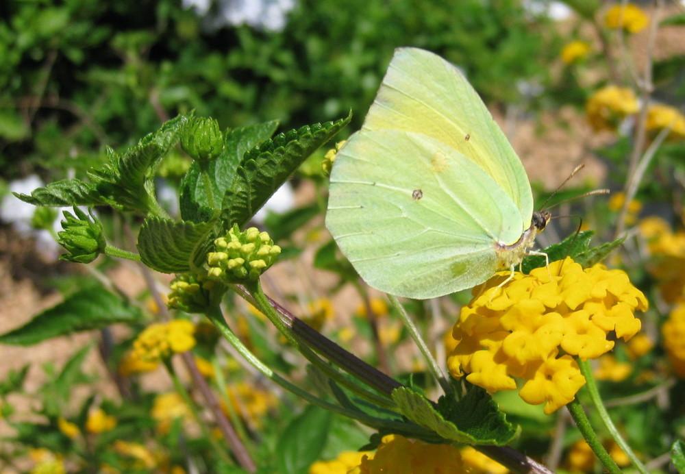 Menorca-Cleopatra-03-e1412808210421.jpg