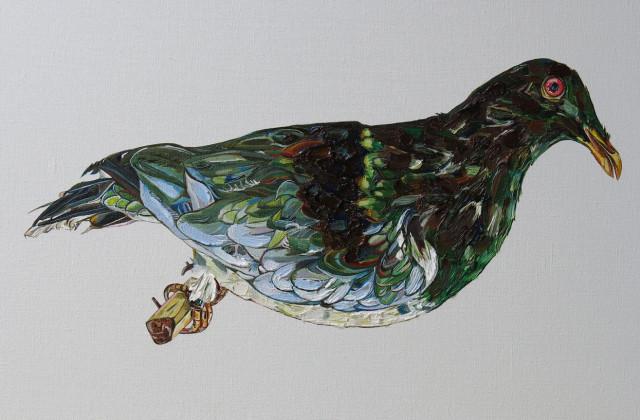 Norfolk Island Pigeon