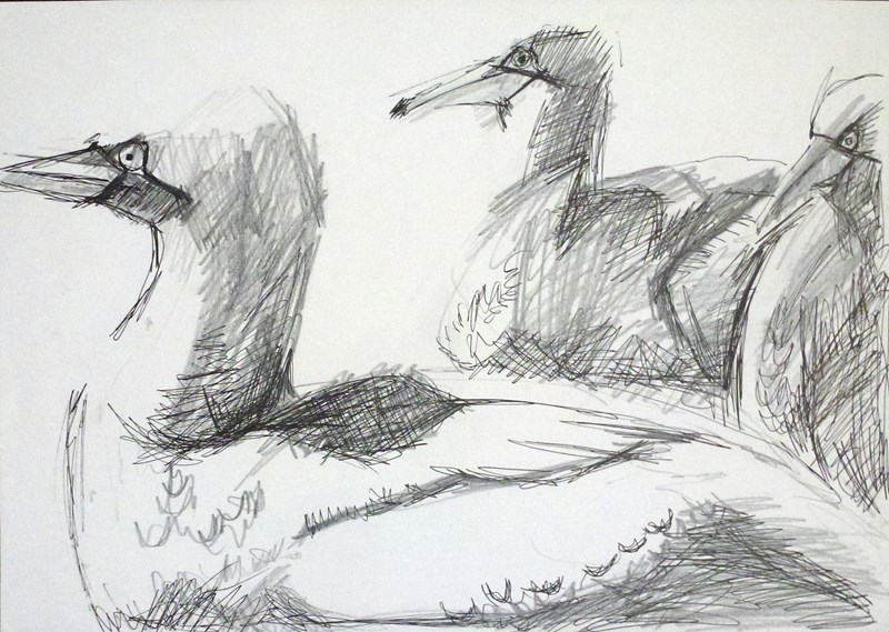 gannets_drawing.jpg