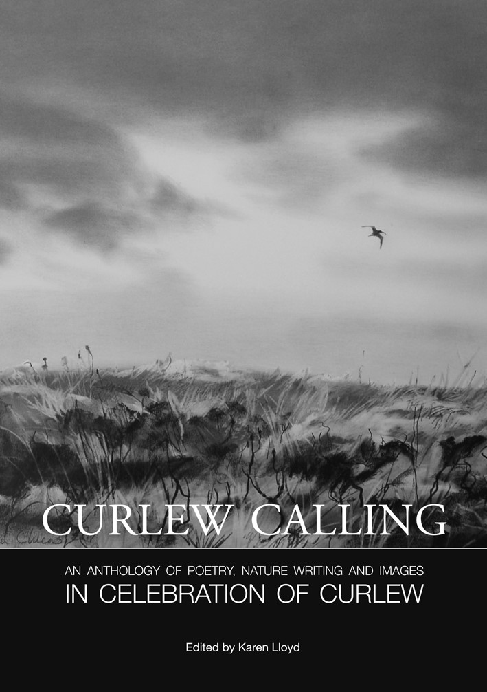 curlew calling
