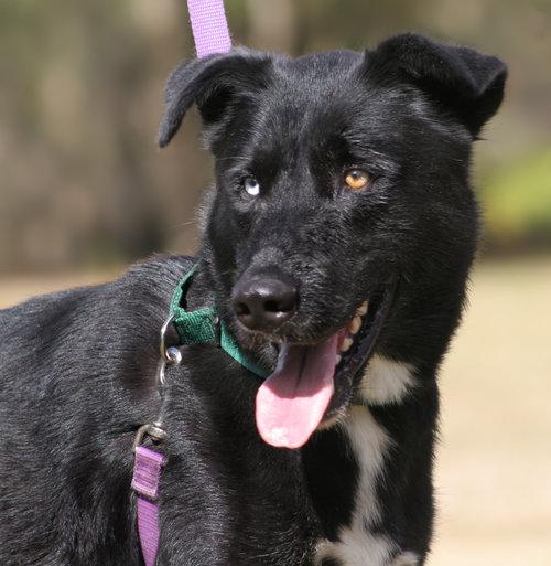 Dakota - Foster to Adopt ONLY