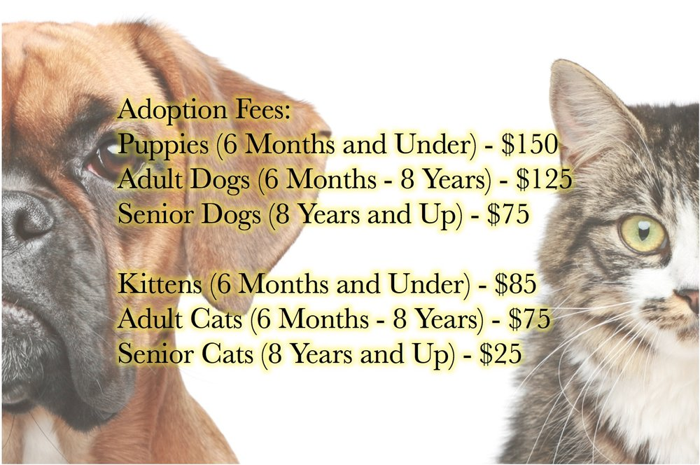 Adoption Fees Image.jpeg