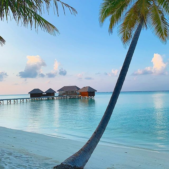 Looking for the dreamiest honeymoon spot in the whole wide world?! You have to go the Maldives! Voted one of the top honeymoon destinations in the world. And yes the water really is that blue 💙🌴☀️