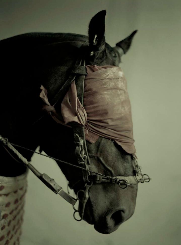 """Andy Anderson, Picador's Horse, 22"""" x 18"""""""