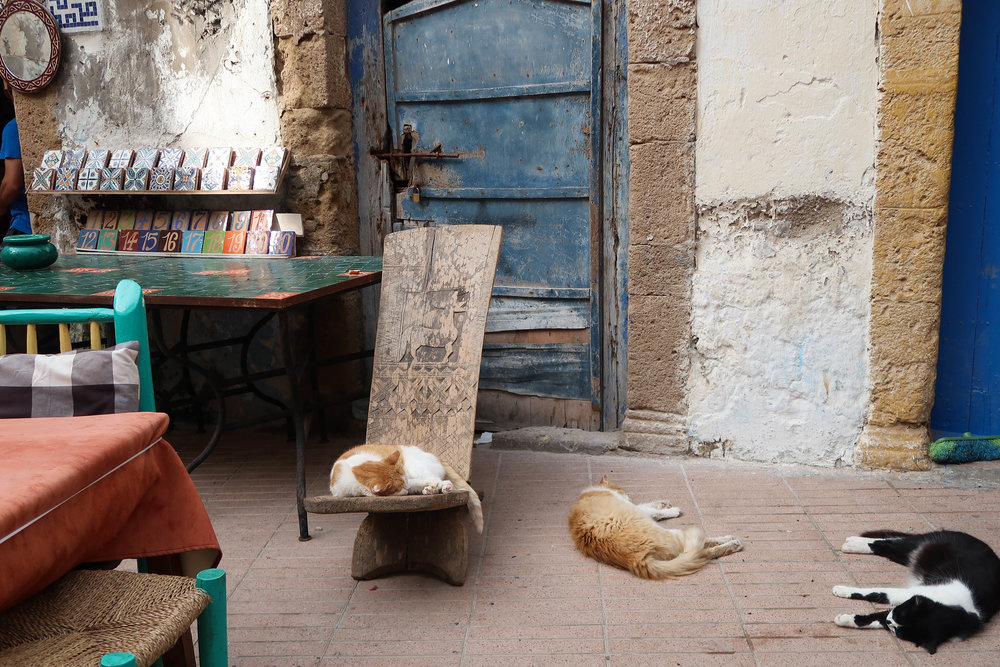 Nap time in Essaouira.