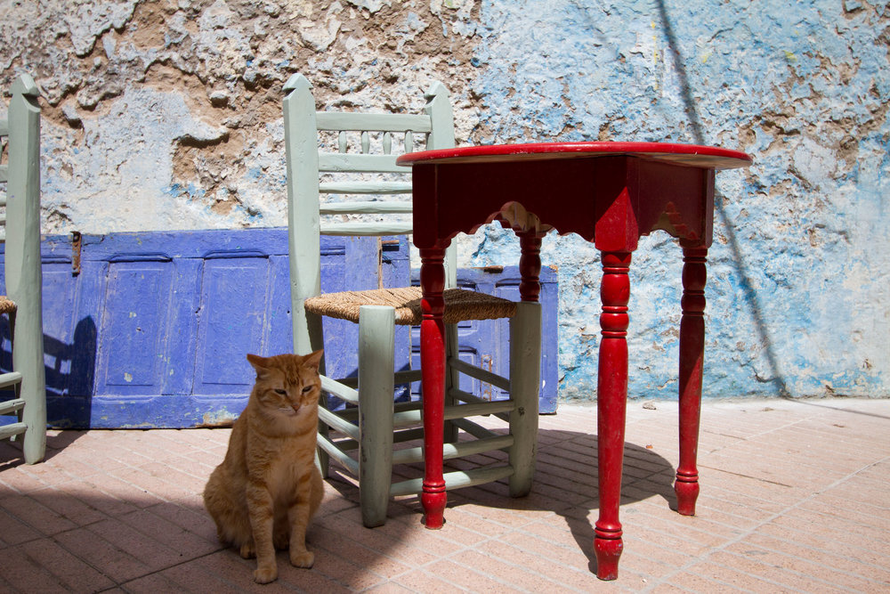 Street cat relaxing at an outdoor cafe in the city's Medina.