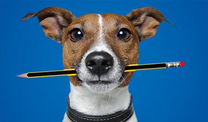 canine policy.jpg