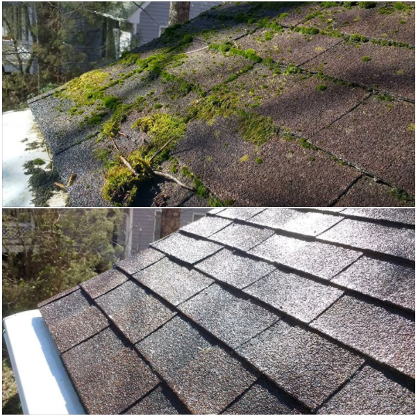 Roof Moss Removal In Bellevue
