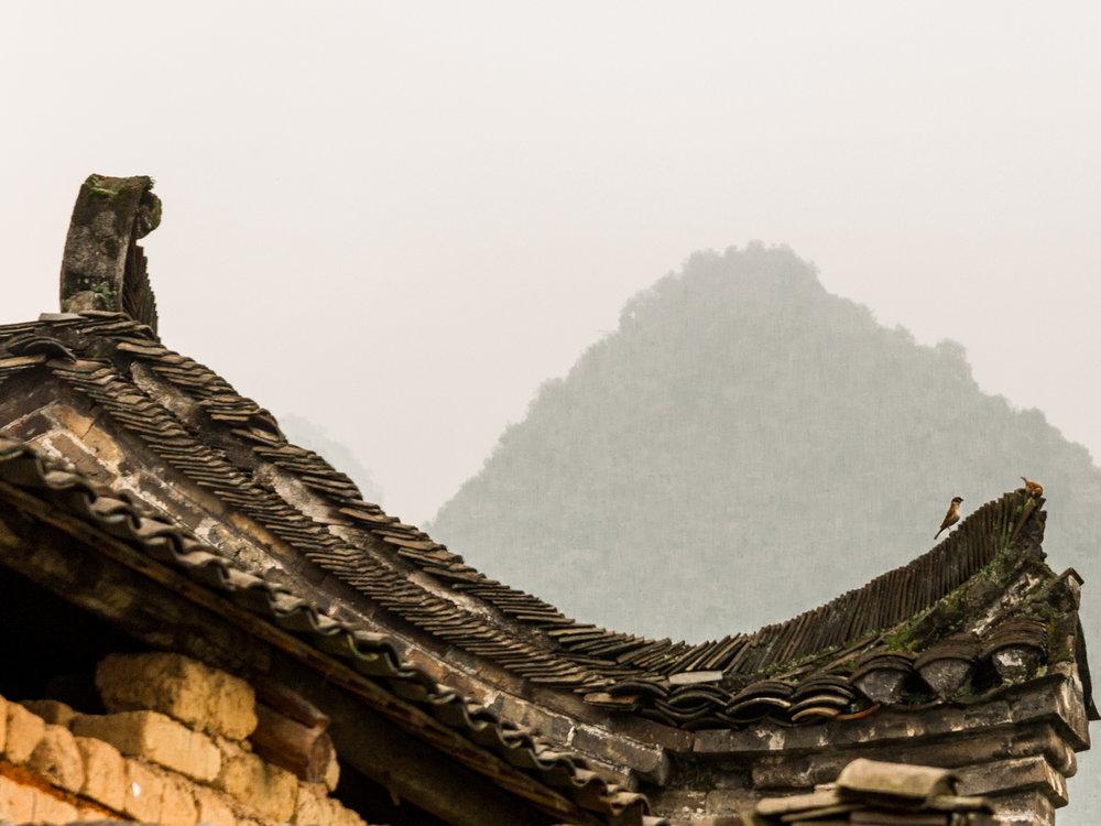Leda Costa Yangshuo Longsheng China 7.jpg