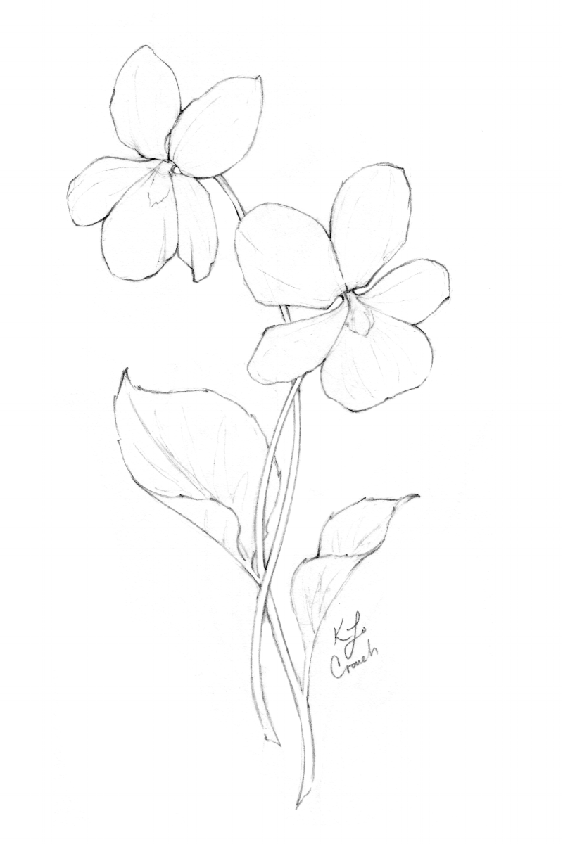 Twin violets flower drawing.  I love how the violets are dancing together in this flower drawing—intertwined and gracefully connected...  See this and more flower drawings at www.blusheddesign.com #flowerdrawings #blushedbotanicals #botanicalillustrations