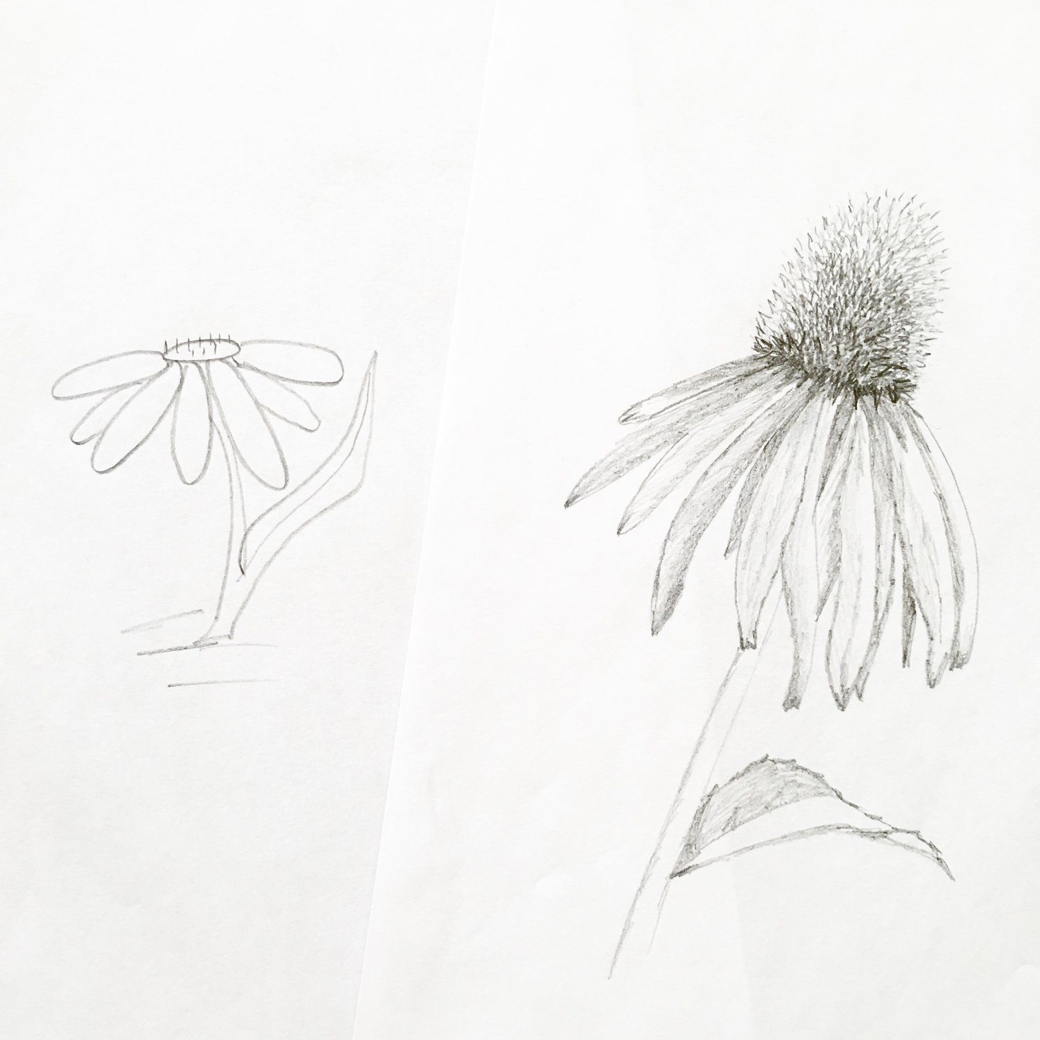 Improve Your Flower Drawing In Less Than 1 Week Blushed Design
