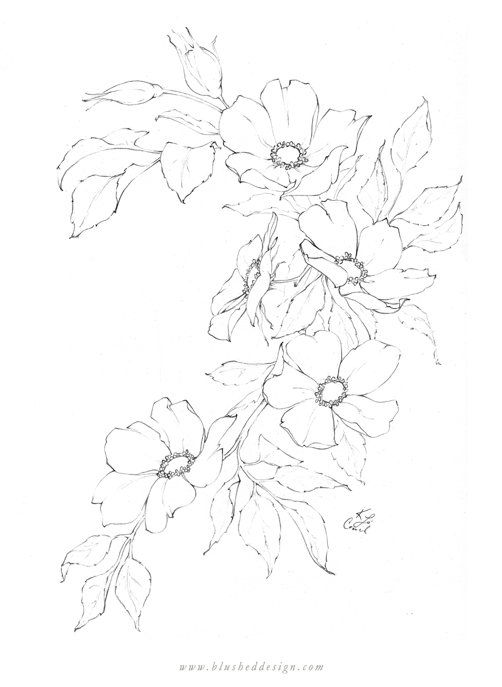 I love this whimsical arrangement of these wild roses in full bloom!  Botanical illustration featuring whimsical rose pencil drawing by Katrina of Blushed Design. #floraldrawing #flowerdrawing #botanicalillustration #gardenroses
