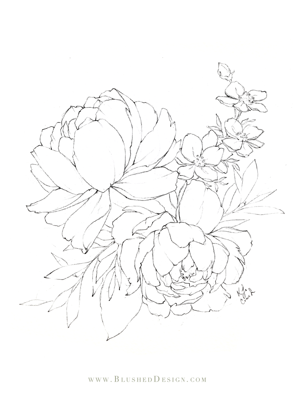 Beautiful peony illustration featuring two large blooms and a few other delicate botanicals within the bouquet.  Learn to draw beautiful illustrations like this by taking the Floral Drawing Challenge by Blushed Design. #flowerdrawing #floraldrawingchallenge #botanicaldrawing #botanicalillustration