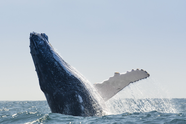 Schedule a whale watching tour!
