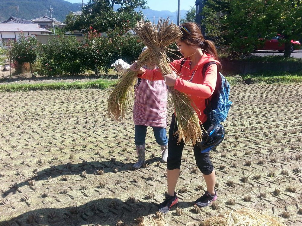 農家さんにちょい手伝い Giving a hand to a farmer.
