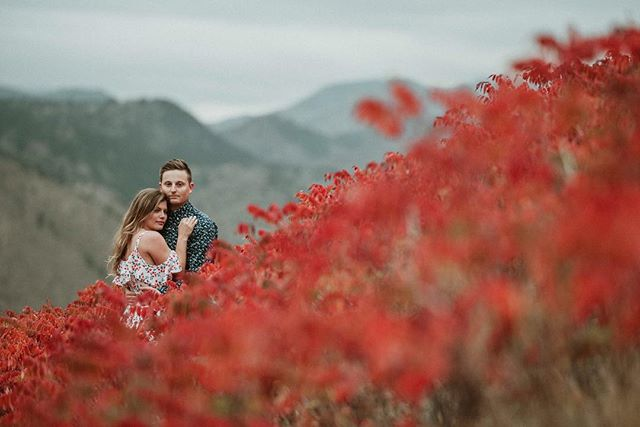 """I'm in love with red. I think it's such a passionate color. Every flag of every country pretty much has red it it. It's power, there's no fence sitting with red. Either you love it or you don't. I think its blood and strength and life. It's magic."" Bryan Batt . . . . . . . #coloradophotographer#sunset#coloradosunset#coloradical#golden #coloradofall #fallcolors #fallengagement #rockymountains#getoutdoors#denverengagementphotographer#gohike#colorado#coloradoadventures#couplesportraits#coloradoportraitphotographer#coloradoweddingphotographer#adventurephotographer#denverengagementphotographer#coloradoengagementphotographer#coloradoengagement#mountainphotographer#estesweddingphotographer#mountainengagement#hikingengagement"