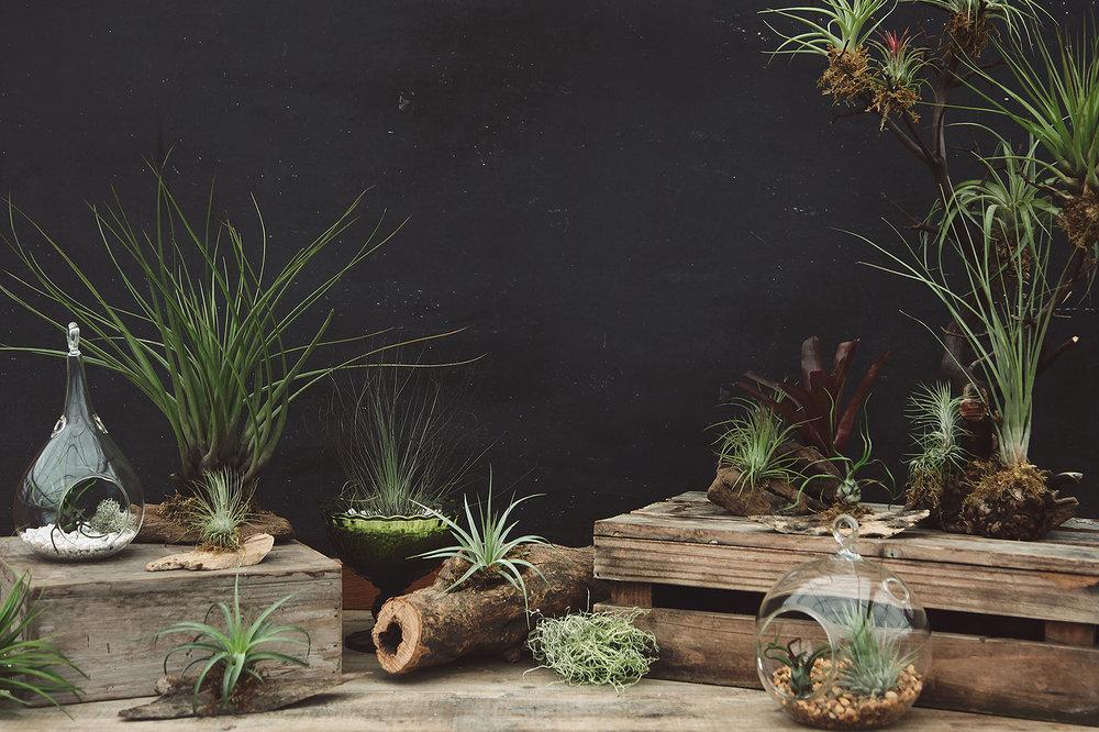 Image:  Hoen's Garden Centre