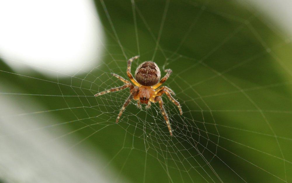 michael-podger-32057_spider.jpg