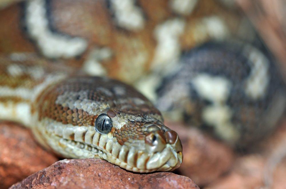 david-clode-408761_snake.jpg