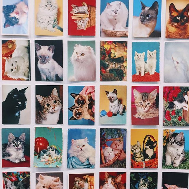 Super Kitsch! Loving the Oriol Vilanova postcards installation at the Fundació Antoni Tàpies Barcelona.  #oriolvilanova #fundacioantonitapies #kitsch #cat #catsofinstagram #lovecat #barcelonaart #barcelonagram #barcelona #postcard #vintagepostcards #postcardart